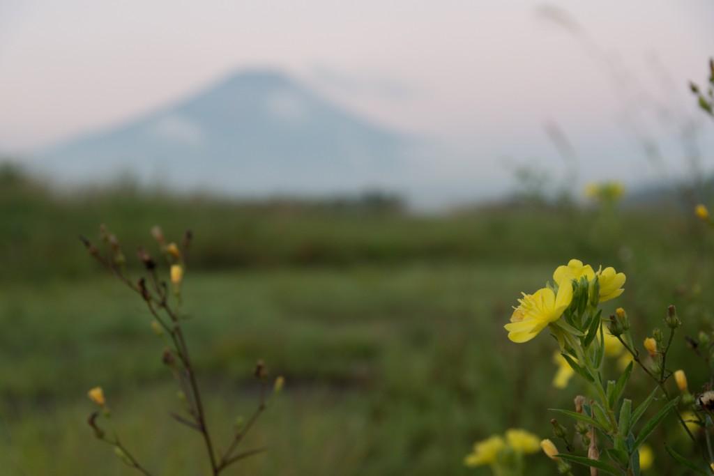 YUGA KURITA Mount Fuji 富士に月見草_KE48508