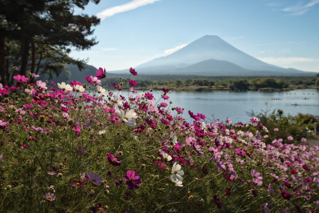 YUGA KURITA Cosmos Mount Fuji Lake Shoji_4E00970