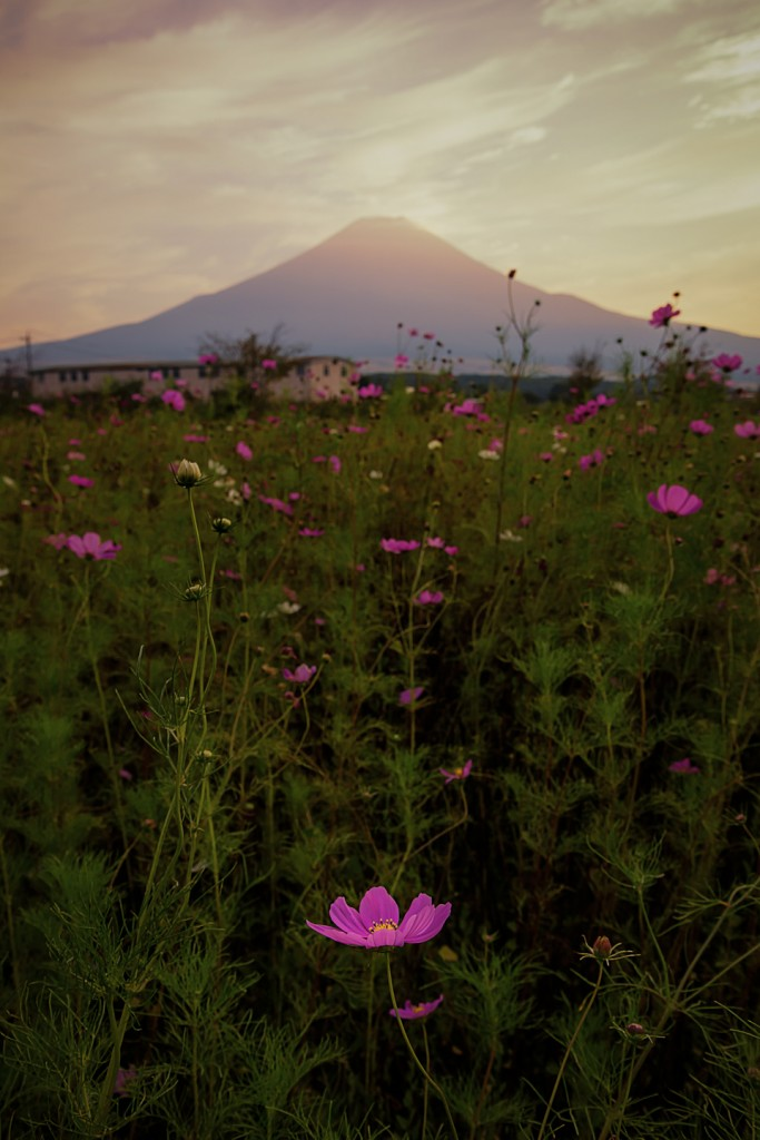 YUGA KURITA Cosmos Oshino Sunset_KS11375