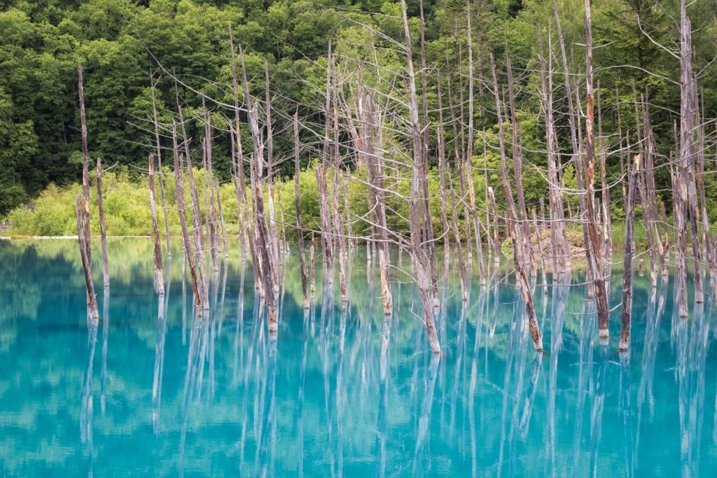 Yuga Kurita Biei Blue Pond Aoike_4E00036