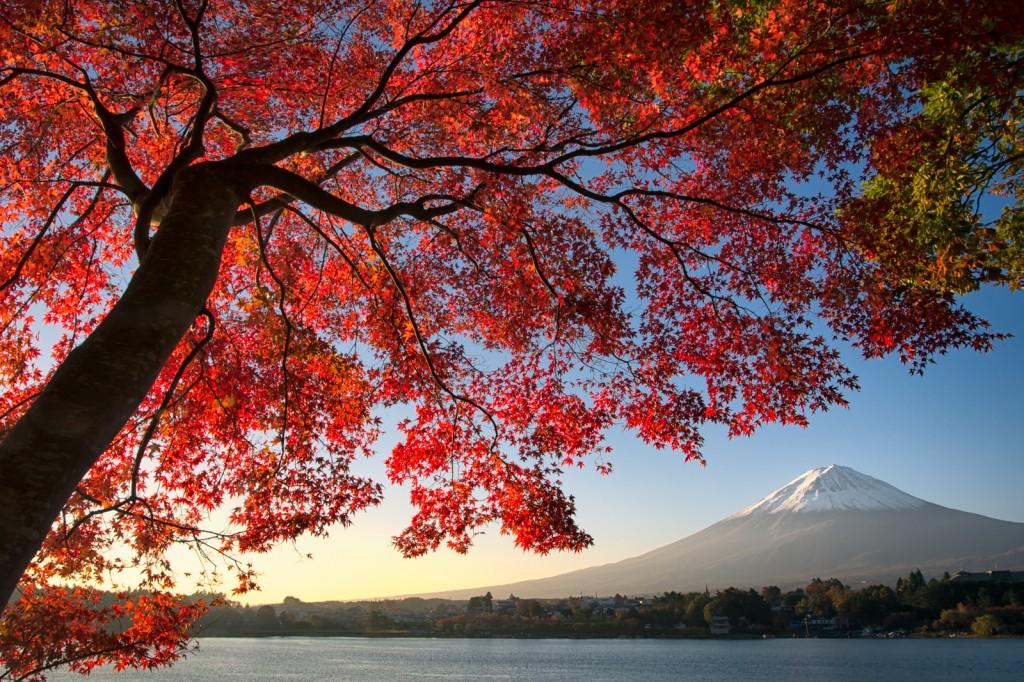 Yuga Kurita Kawaguchiko Fujisan Maple Trees_KS14974