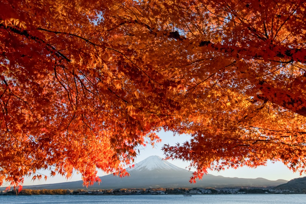 Yuga Kurita Mount Fuji Maple Trees Autumn Leaves Kawaguchiko 20140117-_KE297972